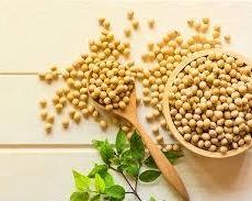植物性たんぱく質を摂ろう