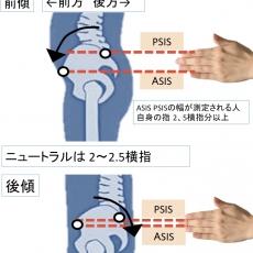 骨盤の評価法